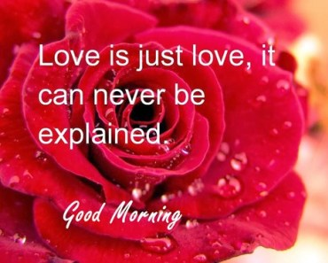 25 Good Morning My Love Images With Quotes
