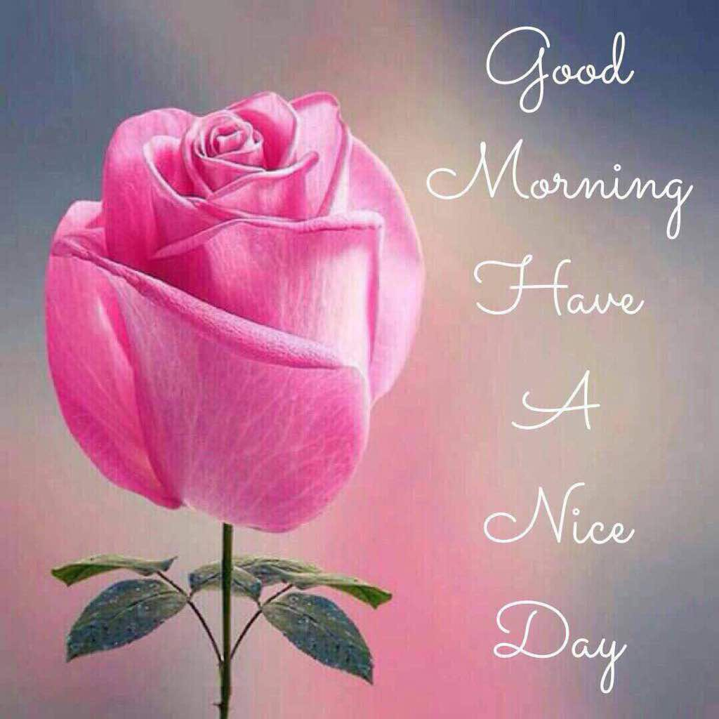 good morning message with a beautiful rose