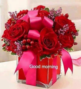 Nice Good Morning Images For Whatsapp Greetings1 Com