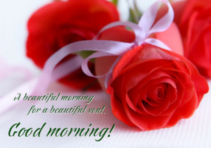 good morning my love rose